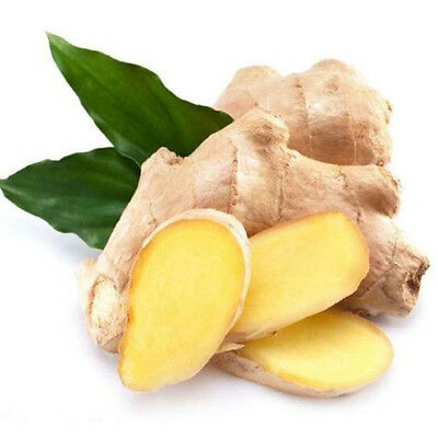 New 100 Pcs/pack Ginger Seeds Jengibre Zingiber Seed Home Garden Plant Farm Seed