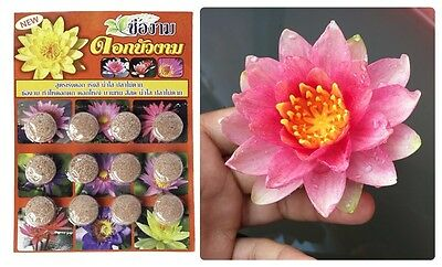 Tablet Fertilizer Well Grow Safety Use Lotus Water Lily Fish Save Best Water Pla