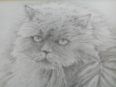 Original pencil drawing of long-haired cat by Eileen Thompson