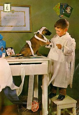 Vintage Postcard PC Belgian Malinois Dog & Boy Veterinarian Netherlands c1950s