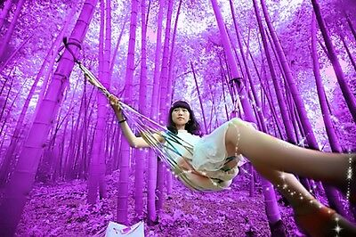 100PCS Rare Purple Bamboo Seeds Seed Plant for DIY Home Garden