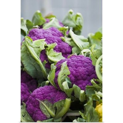 Poster Print Wall Art entitled Purple cauliflower