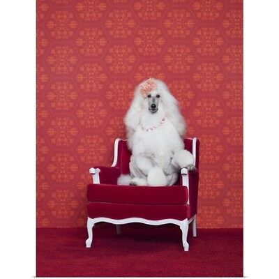 Poster Print Wall Art entitled Poodle sitting on a red armchair