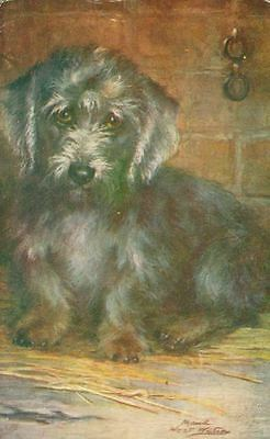 RARE Postcard PC Dandy Dinmont Terrier Dog Tuck England c1905 Maud West Watson