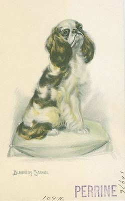 Old Blenheim Cavalier King Charles Spaniel Dog Postcard Made in USA 1910