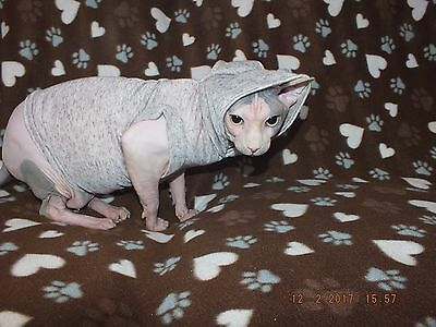 Beige Short Leg Hoodie for a Sphynx Cat - Hand Made by Sphynx Clothes