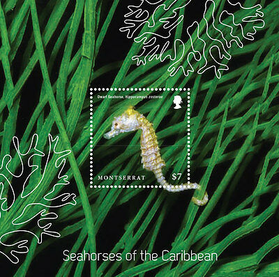 SEAHORSES OF THE CARIBBEAN S/S $7 - Montserrat 2015