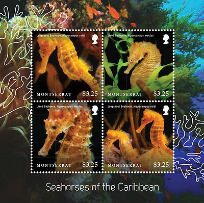 SEAHORSES OF THE CARIBBEAN SHEETLET OF 4 X $3.25 - Montserrat 2015