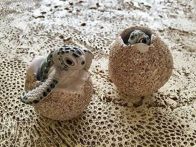 New Sea Turtle Hatchlings Ceramic Egg Collectible Gift Set of 2