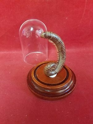 *Taxidermy/Preserved Millipede in Glass Dome Dsply-entomology-insect-animal-bug