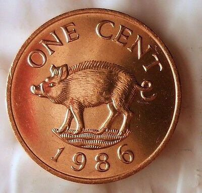 1986 BERMUDA CENT - PIG - Uncirculated from Mint Roll - BARGAIN BIN #DDD