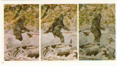 Sasquatch America's Hairy Giants Bigfoot creature USA Canada IMAGE CARD