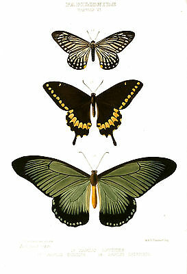 Vintage print poster Butterfly large art for glass frame 90cm painting