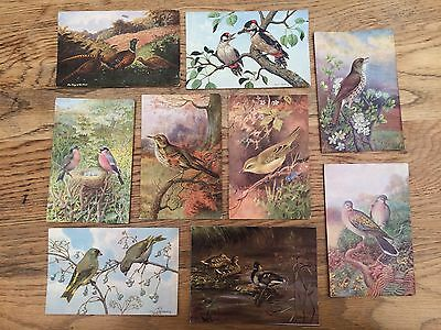 9x natural history art postcards of birds, assorted, 1900s-1960
