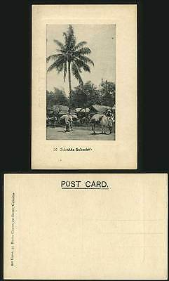 India Old Postcard Cattles Palm Tree - Calcutta Suberbs