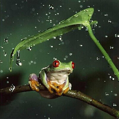 3D 5D Frog in rain Embroidery Cross stitch Mosaic Diamond painting kit