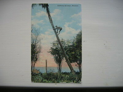 Vintage Hawaii Post Card 1911 Gathering Coconuts Honolulu One Cent Stamp