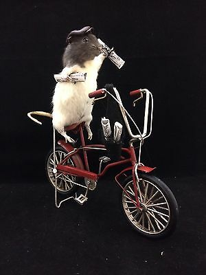 *Taxidermy Rat Paperboy on Bicycle! Anthropomorphic-newspaper boy-delivery-bike