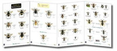 Wildlife World Bees of Britain Field Guide