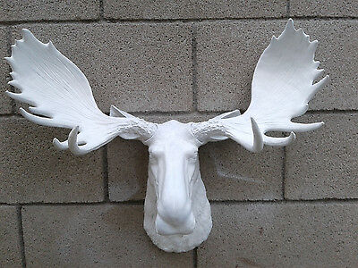 White Moose Head Antler Large Wall Mount Lodge Cabin Log Taxidermy
