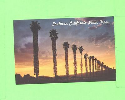 J Postcard Fan Palms At Sunset In Southern California