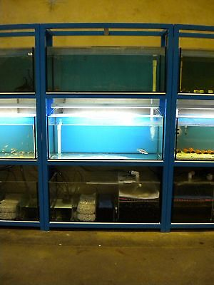 Aquarium Fish Tank 4ft tanks breeding setup
