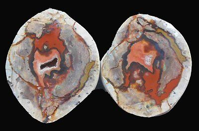 THUNDEREGG PAIR FROM  AGATE CREEK, QLD.  POLISHED Great Specimens