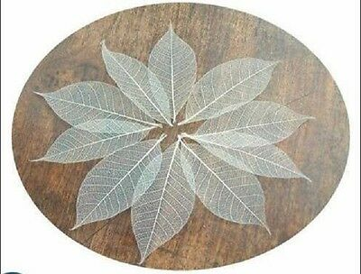 100 natural skeleton leaves for crafts weddings scapbooks free post !