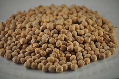 Chickpeas Large 11mm / garbanzo beans (lentils / legumes) - (FREE SHIPPING)