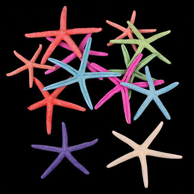 12pcs Colorful Natural Starfish Star Beach Home Ornament Wedding Decoration