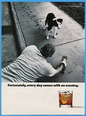1992 Windsor Canadian Supreme Whiskey CUTE Dog Walking On Wet Concrete Print Ad