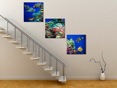 Huge Tropical Fish Abstract Canvas Art Oil Painting Home Wall Decor Set No Frame