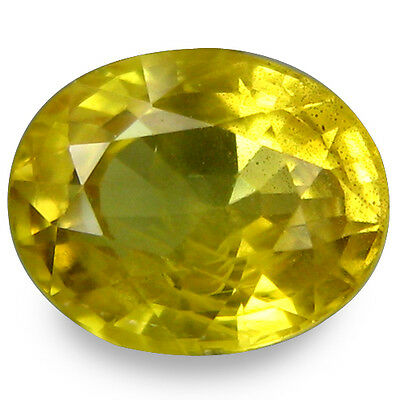 1.465Cts  Mesmerizing Luster Yellow Natural Sapphire Oval Loose Gemstones