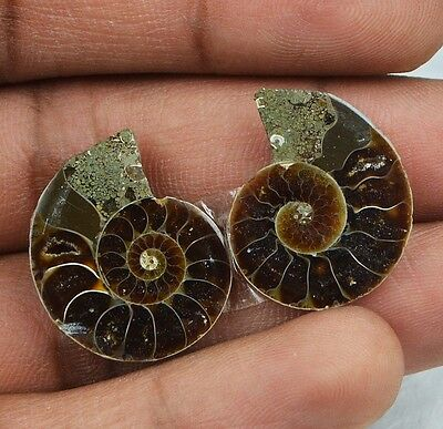 25cts Natural Ammonite Fossil Pair from Indonesian Sea NJ51