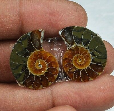 22cts Natural Ammonite Fossil Pair from Indonesian Sea NJ50