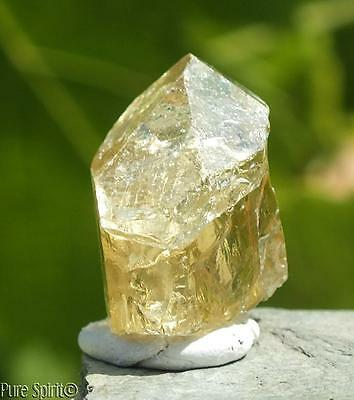 Golden Apatite Crystal High Grade Terminated Point Raw Unheated Mineral 7g 18mm