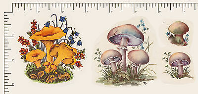 4 x Waterslide ceramic decals Decoupage Mushrooms Toadstool Fungi PD993