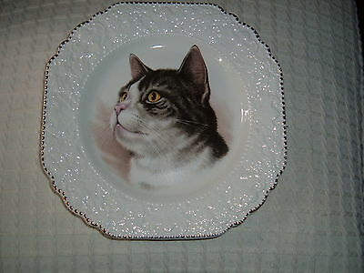 Gorgeous Lord Nelson Pottery Cat Themed Square Plate Vintage 8 X 8""