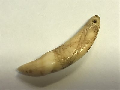 #e32 Rare Drilled Engraved Bone Canine Tooth Glovers Cave Pendant Bead Coyote