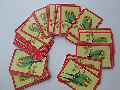 Vintage Full Pack Playing Cards Birds Colourful Budgerigars Budgies