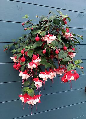 """Hang 7"""" (18cm) plant pots from a screw in wall, fence,shed.Plant hangers, rings"""