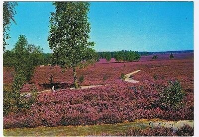 Holland Netherlands Postcard Lavender Fields
