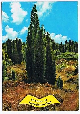 Holland Netherlands Postcard Hoenderloo Trees in Field Flowers