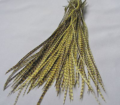 Lot of 100 Metz Rooster Grizzly Saddle Feathers - Dyed Olive - Fly Tying