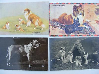 Fourty Postcards of Animals - Zoo - Dogs - Cats- Artist Drawn  etc