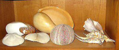 Beautiful shell collection.  Plus display stands.