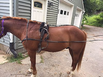 Leather Horse Driving Harness