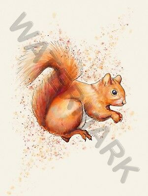 Red Squirrel Watercolour Art Print Poster Hp4100