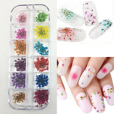24Pcs 12 Colors Real Dried Flowers DIY Nail Art Tips Stickers Manicure Decor