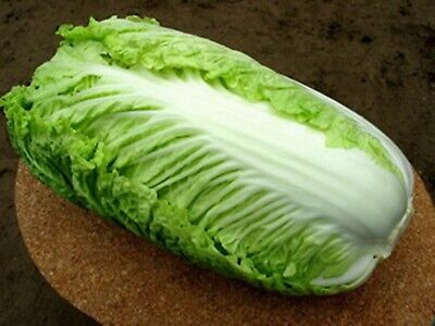 Vegetable Chinese Cabbage Seeds Giant China Heirloom NON-GMO